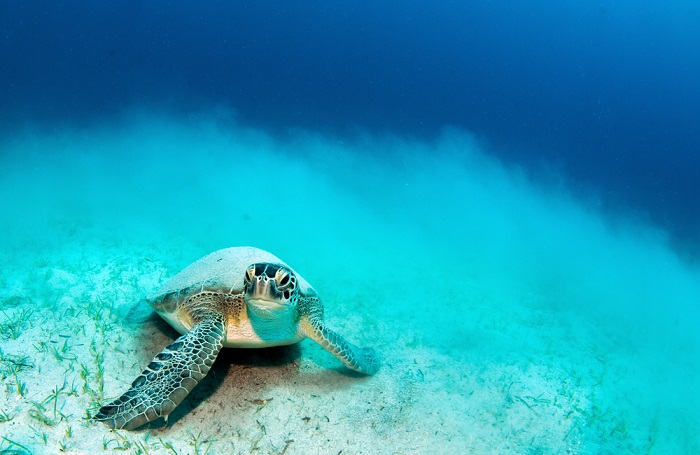 Turkey-turtle-best-snorkeling-in-the-med
